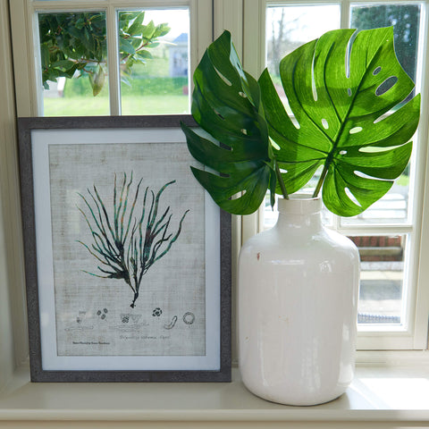 Framed Botanical Print - Filiformis