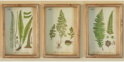 Trio of fern illustrations mounted in deep lightly distressed wood frames