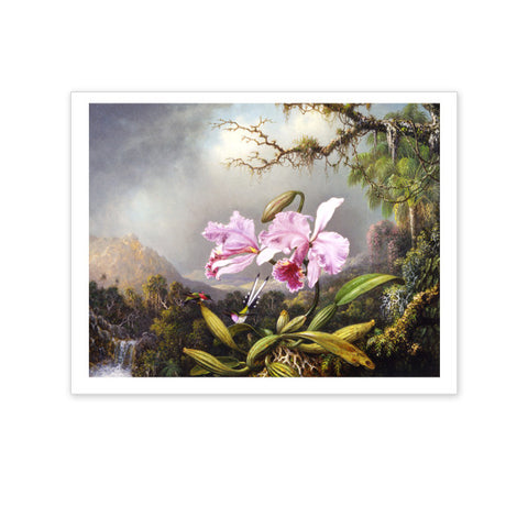 Study of an Orchid Box Note Cards