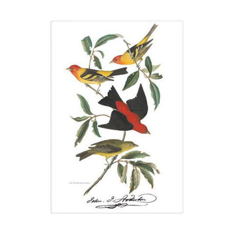 Western Tanager Kitchen Towel