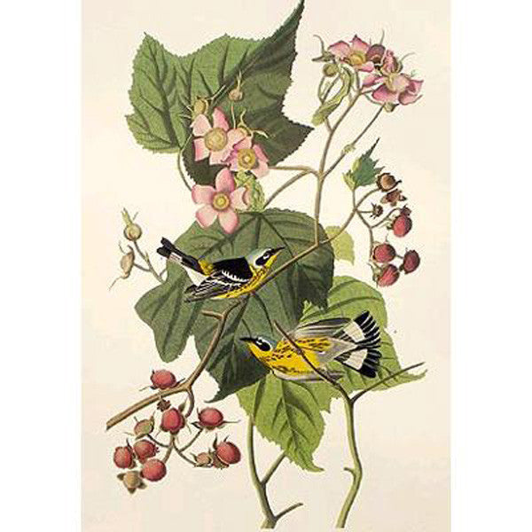 Black & Yellow Warbler Princeton Print - New-York Historical Society Museum Store