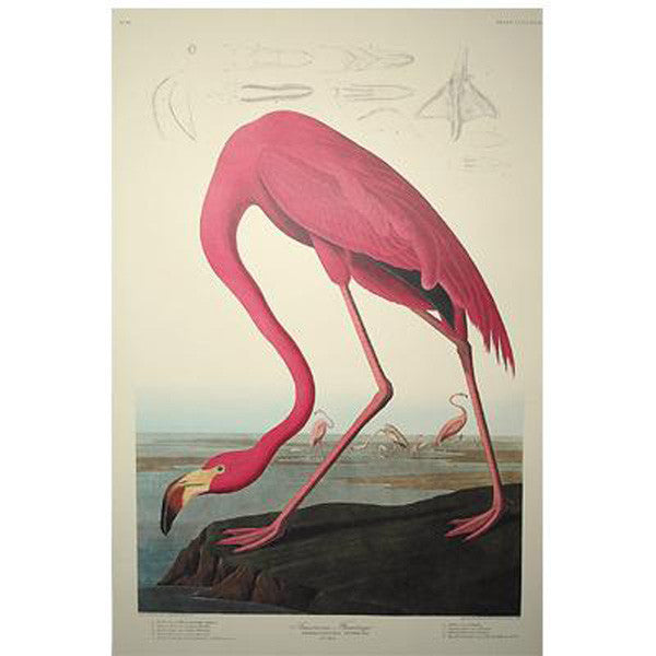 American Flamingo Princeton Print - New-York Historical Society Museum Store