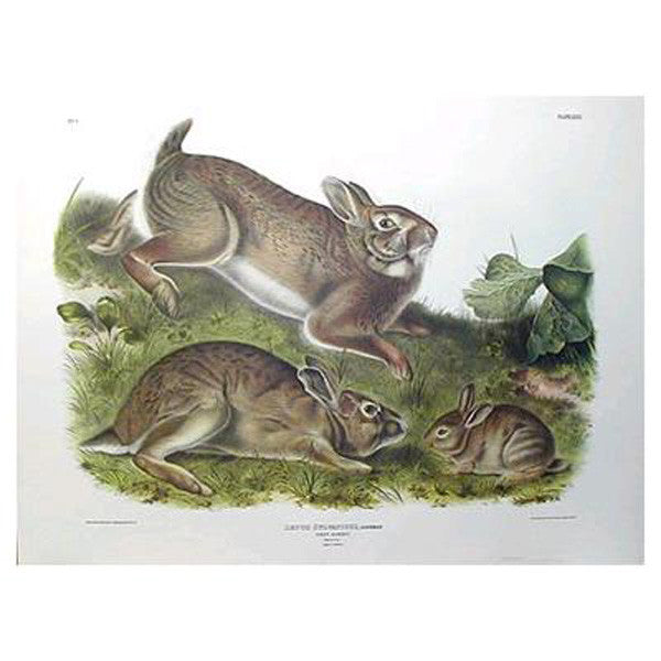 Grey Rabbit Princeton Print