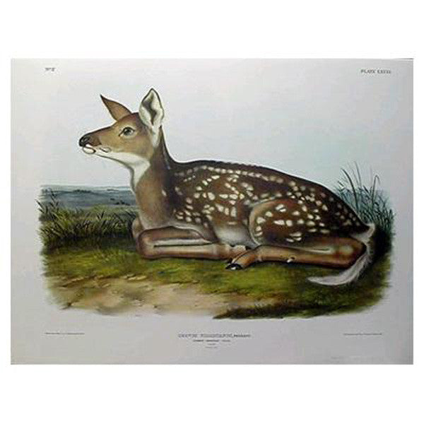 Common Deer (Fawn) Princeton Print - New-York Historical Society Museum Store