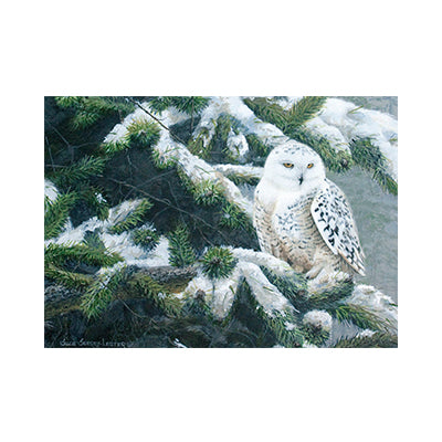 Owl in Winter Box Card