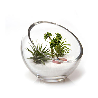 Large Terrarium Bowl