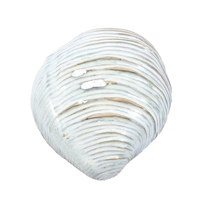 Oceanology Medium Shell Dish