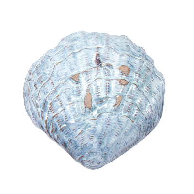 Oceanology Large Shell Dish