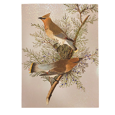 John James Audubon Cedar Waxwing Box Cards