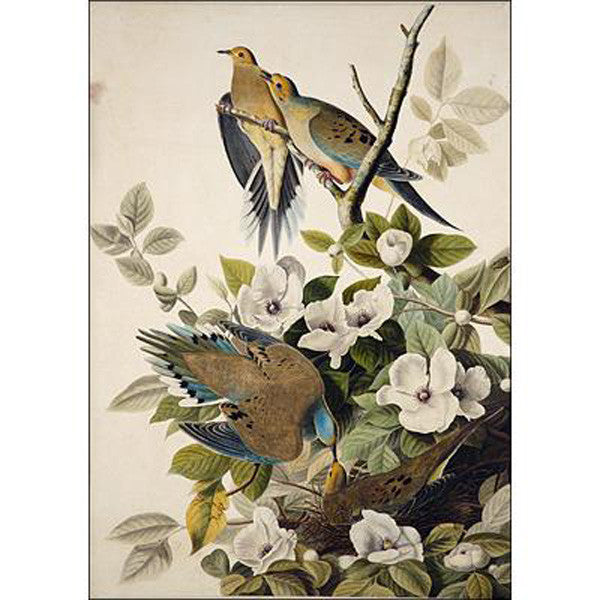 Carolina Turtle Dove Oppenheimer Print