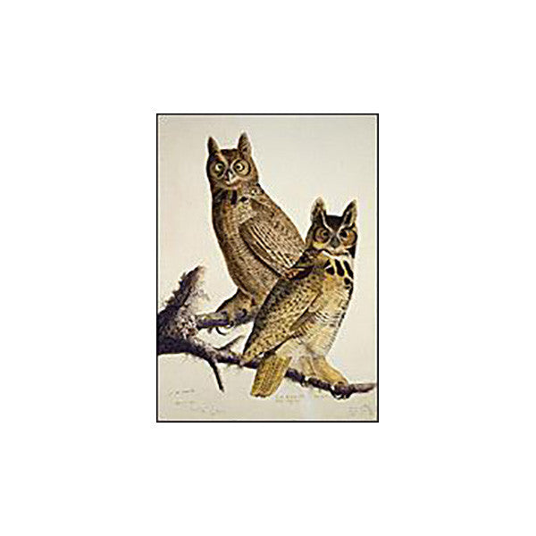 Great Horned Owl Oppenheimer Print