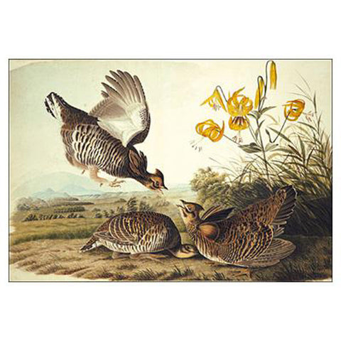 Pinnated Grouse Oppenheimer Print