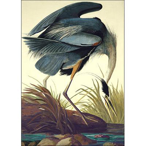 Great blue Heron Oppenheimer Print