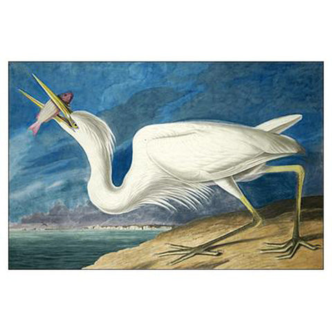 Great White Heron Oppenheimer Print