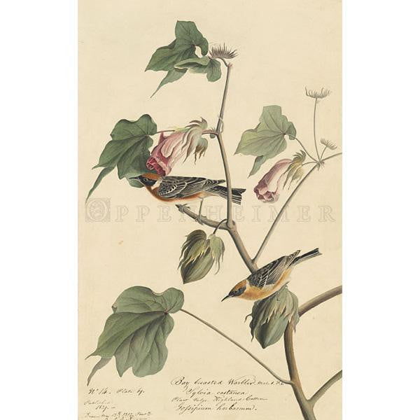 Bay-breasted Warbler Oppenheimer Print - New-York Historical Society Museum Store