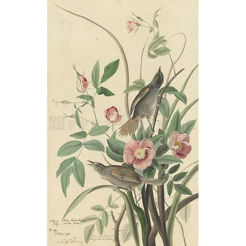 Sea-side Finch Oppenheimer Print