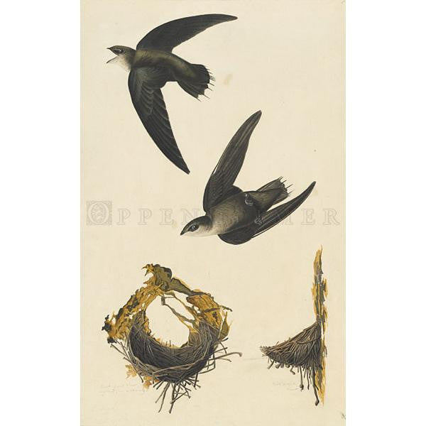American Swift Oppenheimer Print - New-York Historical Society Museum Store