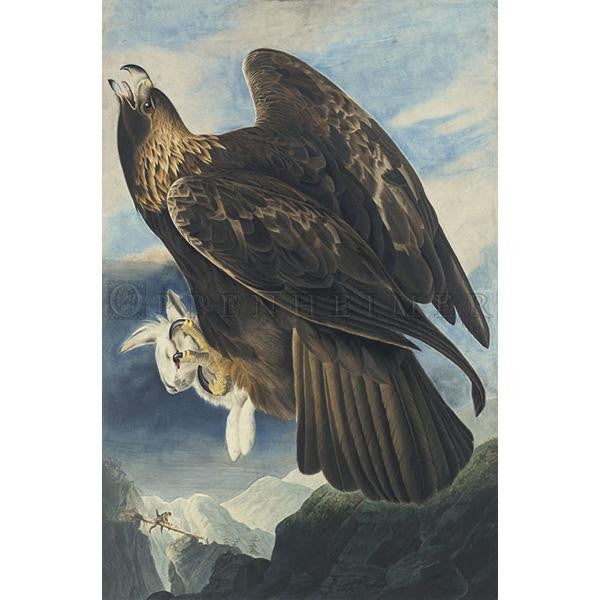 Golden Eagle Oppenheimer Print