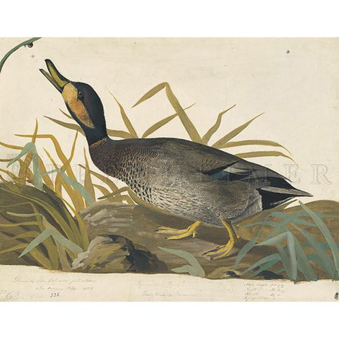 Bemaculated Duck Oppenheimer Print