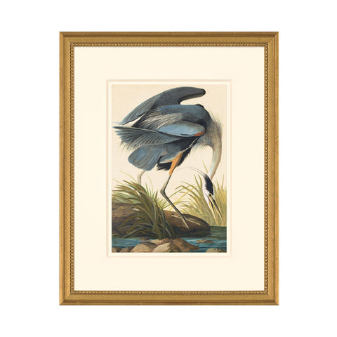 Great Blue Heron: Framed Octavo Edition Oppenheimer Print