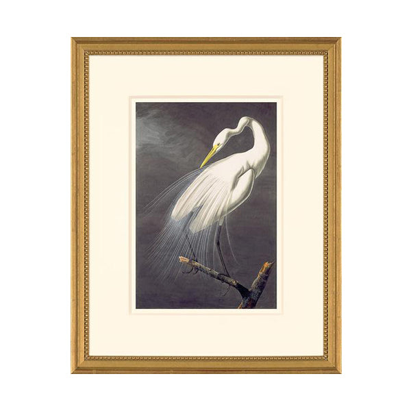 Audubon Great Egret Framed Oppenheimer