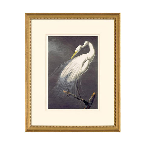 Great Egret: Framed Octavo Edition Oppenheimer Print