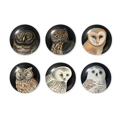 Owl Domed Magnets