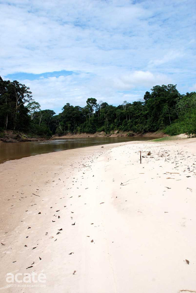 Matsés River Bank