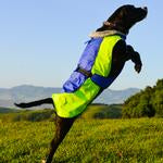 Alpine All-Weather Dog Coat