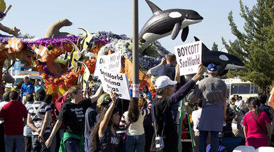 12-year-old animal rights activist arrested in California for Seaworld orca protest