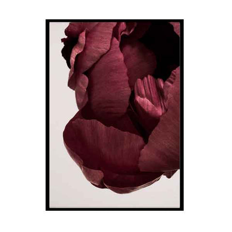 Framed Peonia 02 photo art print by Norm Architects (50x70cm)