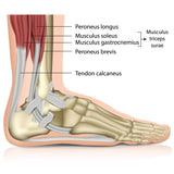 How to Treat all Types of Ankle Sprain