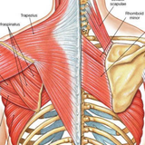 Winged Scapula | Serratus Anterior | Trigger Point Therapy