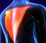 Trigger Point Therapy - Treating the Trapezius