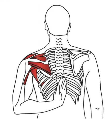 Supraspinatus and Infraspinatus Stretch