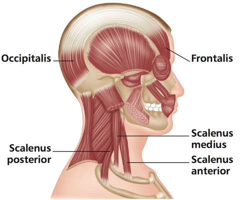 Head and Neck Trigger Points