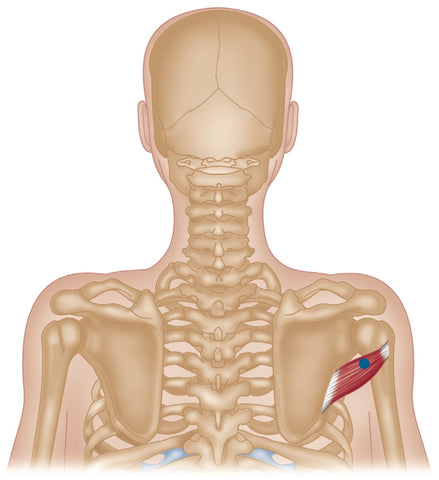 Teres Minor Trigger Points