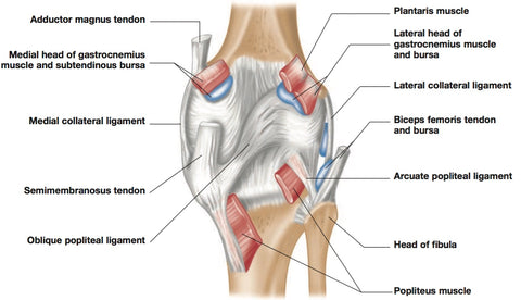Knee Pain Trigger Points