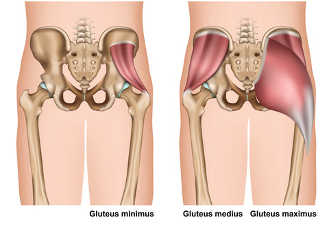 Gluteal Muscles Trigger Point Therapy