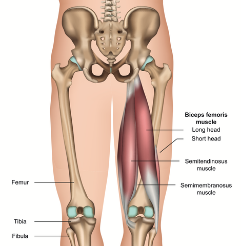 Hamstring Muscles Trigger Points