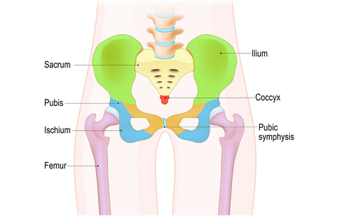 Pelvis and Sacroiliac Joint Massage CE