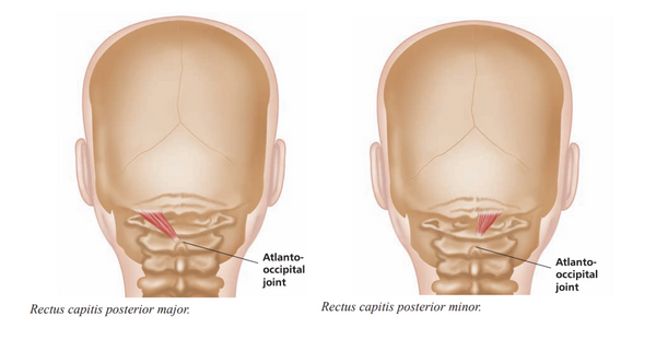 Suboccipital muscles Trigger Point Release