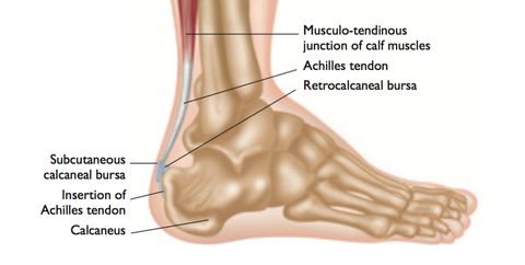 Retrocalcaneal Bursitis Trigger Points
