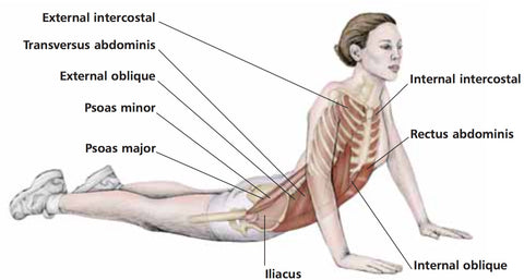 Internal Obliques Trigger Point Therapy