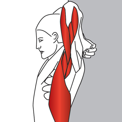Triceps Trigger Point Stretch