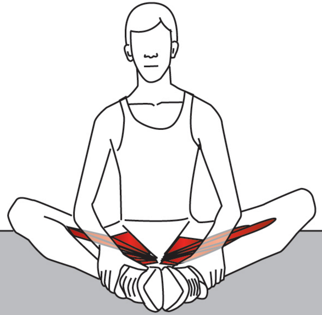 Treating the Hip Adductors with Trigger Point Therapy – Stuart Hinds ...
