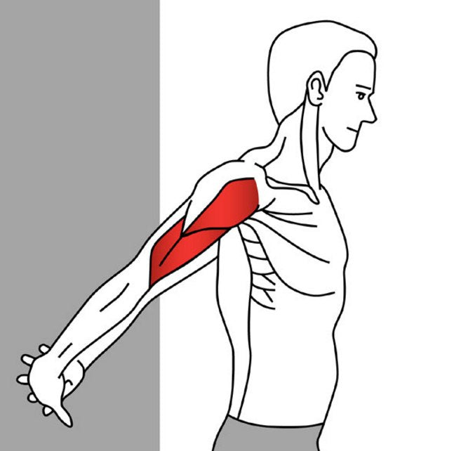 Stretching for Pain Relief - Anterior Deltoid – Stuart Hinds ...