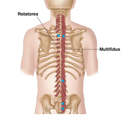 Multifidus Rotatores Trigger Points