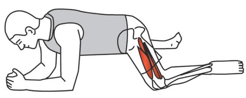Hip Adductor Trigger Points