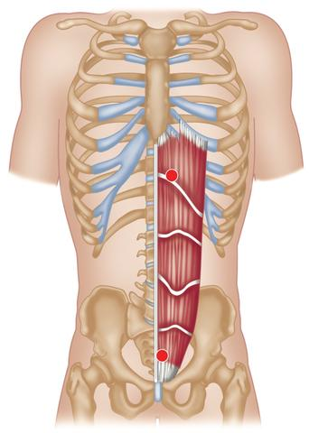 Trigger Point Therapy - Rectus Abdominis Trigger Points – Niel Asher ...